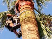 Palmen in Arta